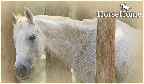 HorseHome HHbanner_zpsqmnudbtl