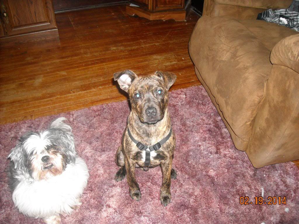 Axel at 5 months Axel001_zps715d6609
