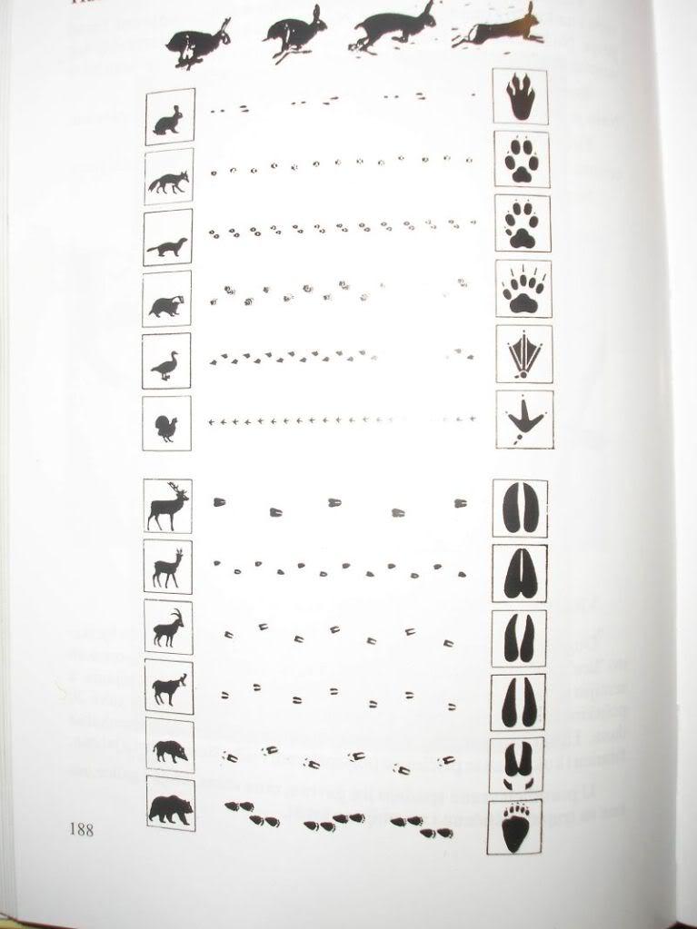 Praćenje tragova u prirodi - Page 4 P4140004