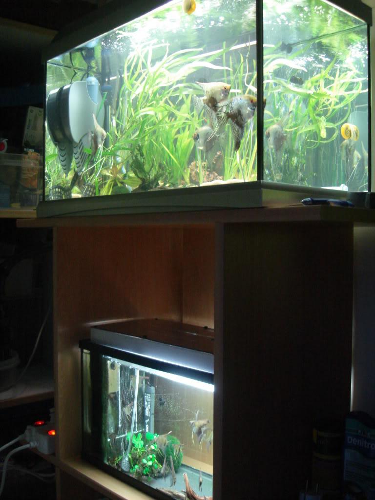 fabrication d'un meuble pour 2 aquariums DSC08827