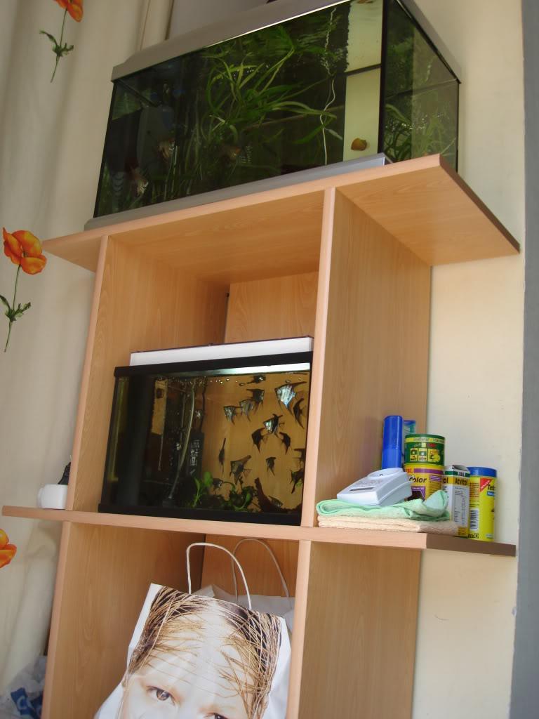 fabrication d'un meuble pour 2 aquariums DSC08840