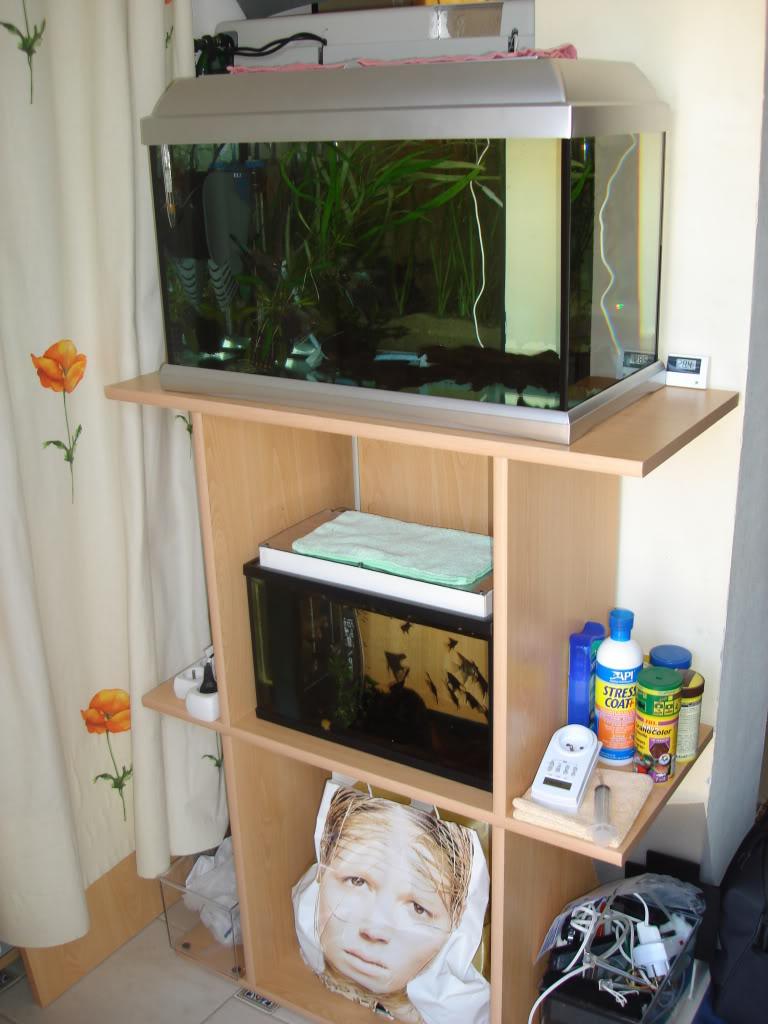 fabrication d'un meuble pour 2 aquariums DSC08851