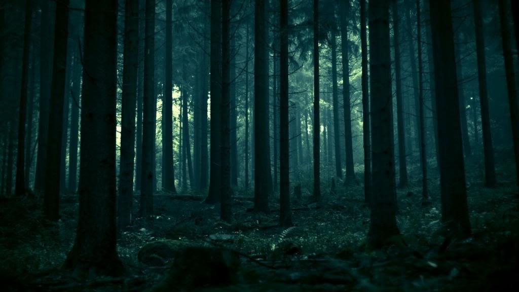 Un camino un destino, el encuentro infortunio  - Página 2 Bosque-de-noche_zps116840f9