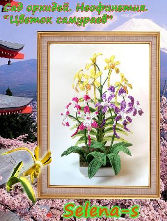 Конфетка Орхидея Неофинетия D1c5613ce65b7f527656b56ce1a6324e