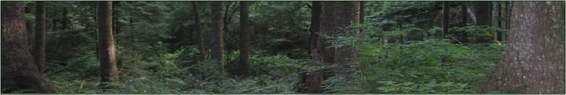 La Push Forests