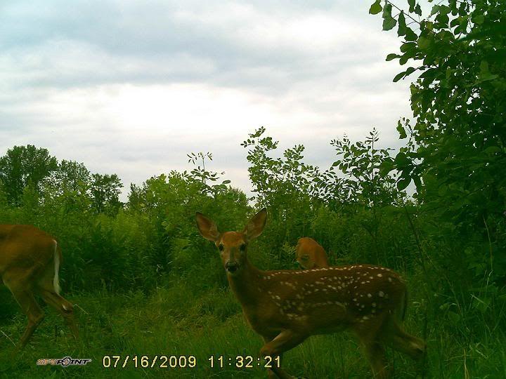 Bambi et sa mère 21juil0989