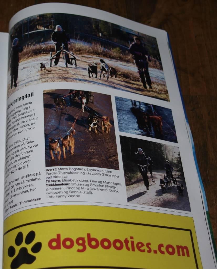 Hobbyfotografen tar av... - Page 2 PC312221