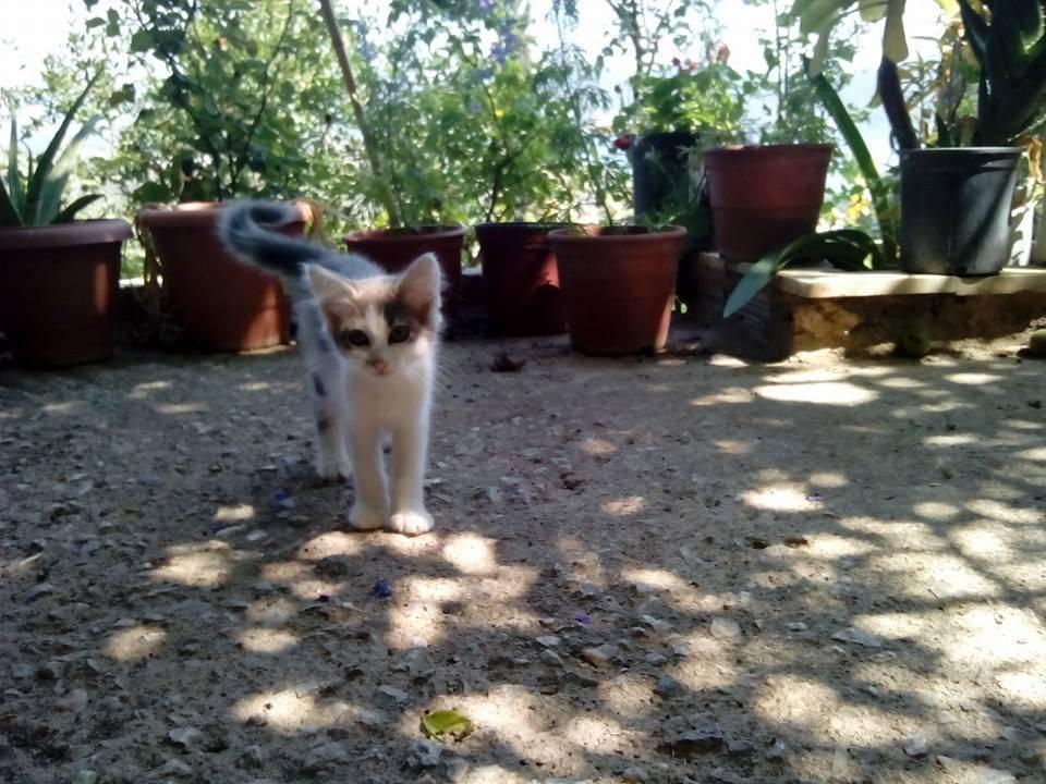 Η μικρή Φαίδρα ψάχνει για το παντιτινό της σπίτι Υιοθετήθηκε!!! 10462500_786094521435538_4964607888305444304_n_zps682c8506
