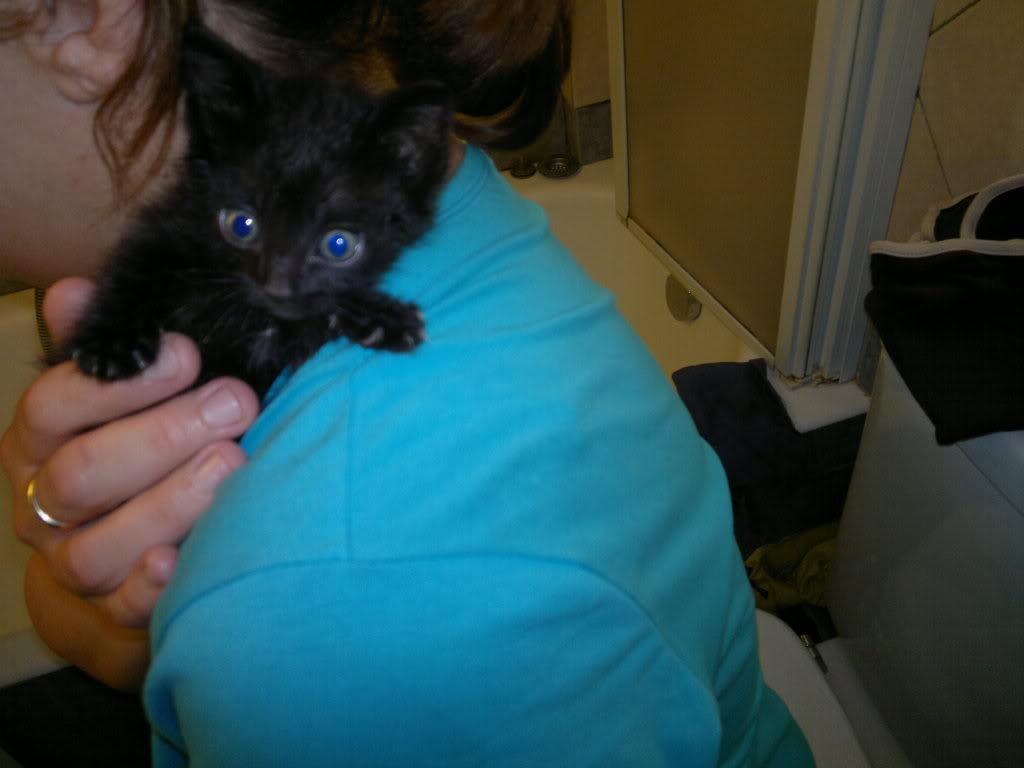 Μαυράκι μωρό γατάκι βρέθηκε στη δουλειά! 18052011064