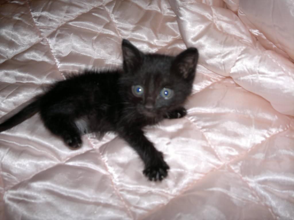 Μαυράκι μωρό γατάκι βρέθηκε στη δουλειά! 19052011083