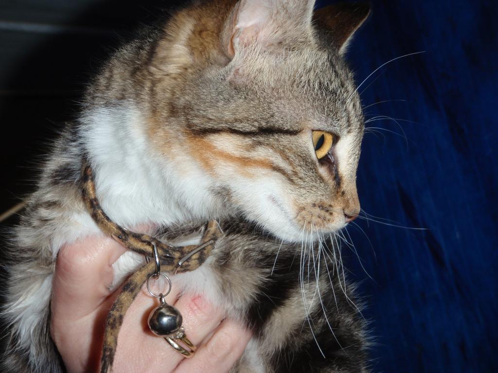 Χαρίζεται η μικρούλα ιδιαίτερη τριγρούλα Ίριδα  Υιοθετήθηκε!! P3091384_zps40ea39bb