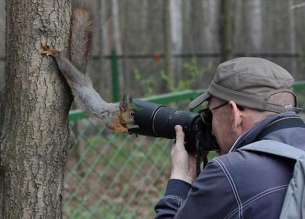 Squirrel hunters beware Skwerl-1