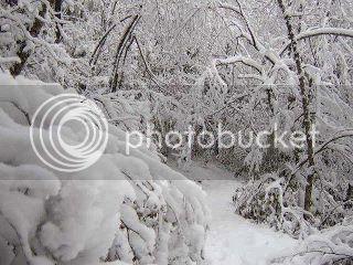 நான் ரசித்த இயற்கை காட்சில் சில உங்களுக்காக....2 - Page 21 Snow_zps47d0a557