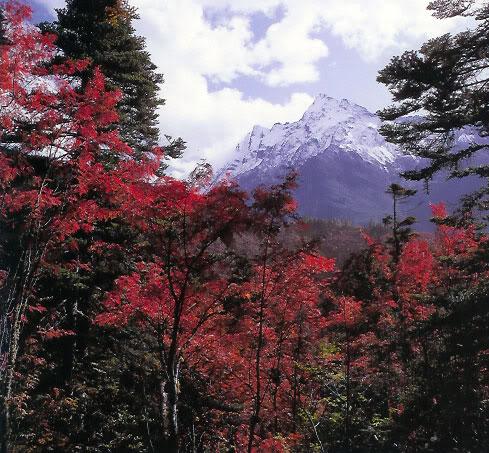 இயற்கை அழகு நிறைந்த காட்சிகள்  - Page 7 Autumn-forest