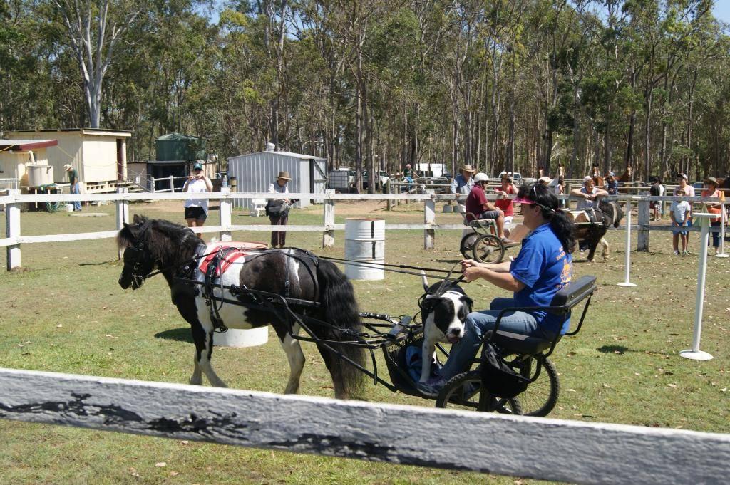 Riding For Disabled! 21st Sept 2013 DSC00924_zps597c9b23