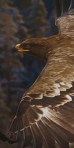 Monturas Aguila