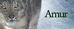 Registro de Raza Amur