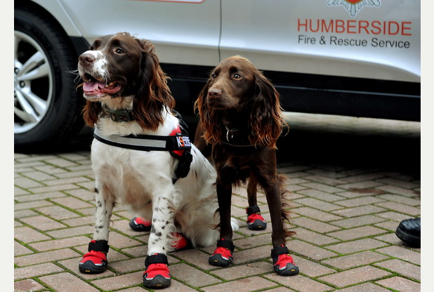 Sniffer dogs get even better but the police don't want them. Aston