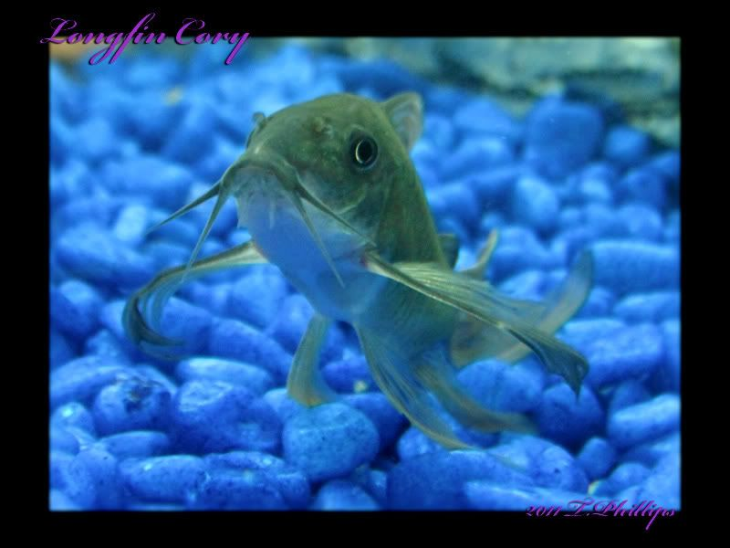 May/June FPOTM Competition... LongfinCory