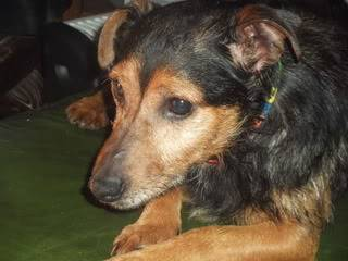 Look who's available – Arry, 3yr old Terrier Arry05