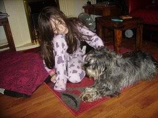 Cecil, approx 5 years, Schnauzer - Fostered in South Wales Cecil04_zpsa051f5e8