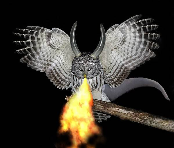 If I were a dragon ... I would look like this .. - Page 5 Firebreathingdragonowl