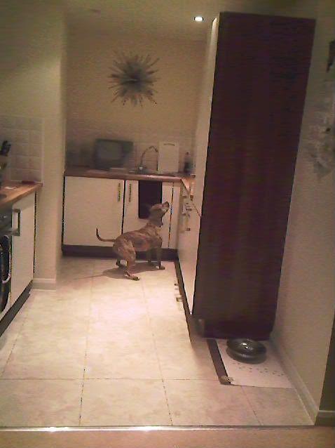 Doggy Incredibubbles Photo-0225