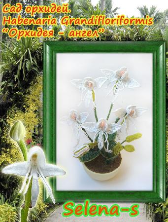 Конфетка Орхидея-ангел D7360c2a4b01a2ea47290757d6d50d3c
