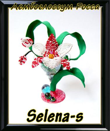 Конфетка Орхидея Лембоглоссум E5048882335af1bc9021a16bb519f366