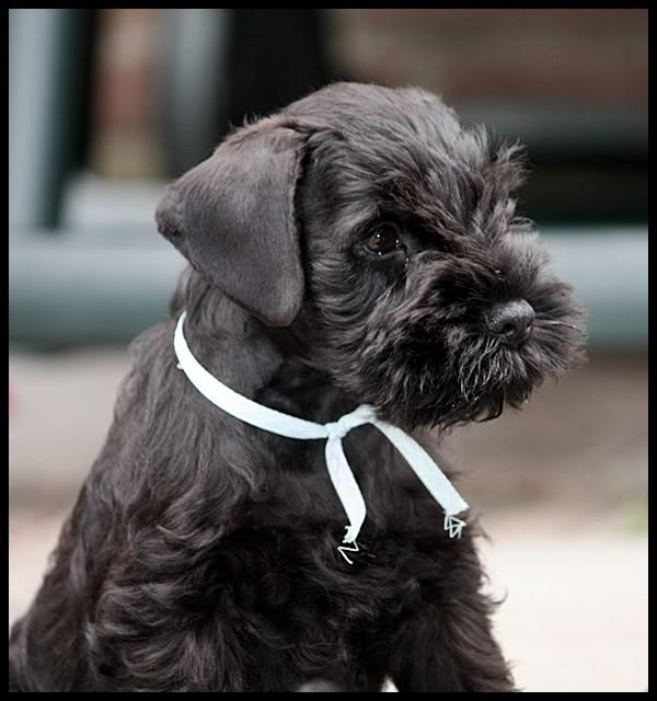Dog Photo Contest IMG_0100-1