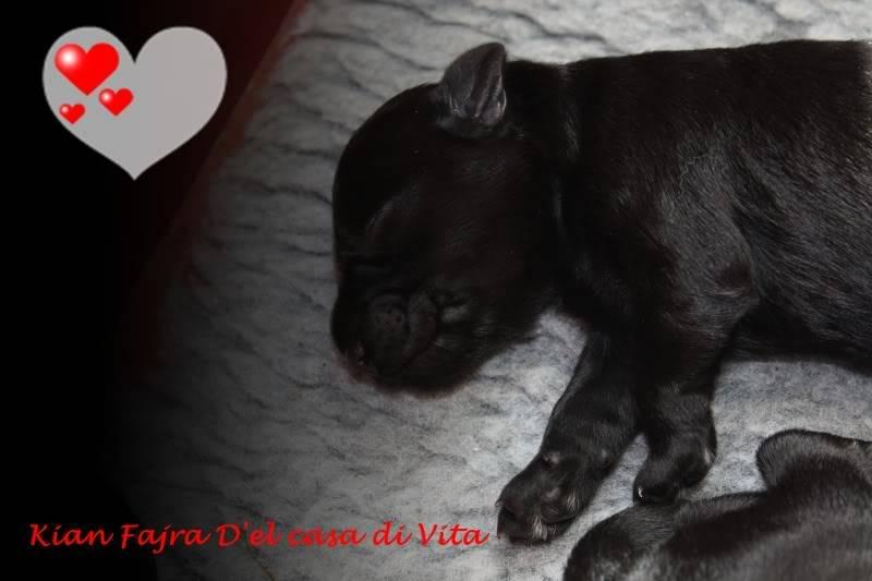 creation of puppy pics IMG_4171
