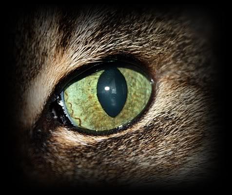 Little eye IMG_6216