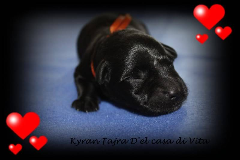 creation of puppy pics Kyran1dag