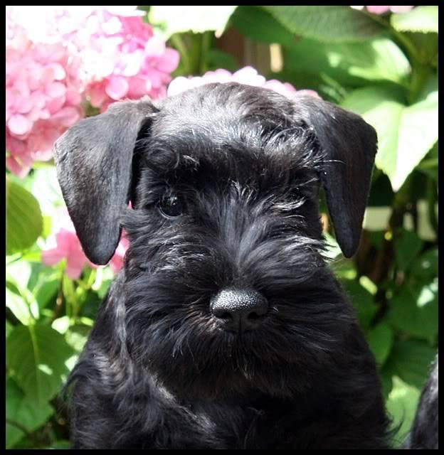 My new girl Latoya Fenna D'el casa di Vita Latoyakop