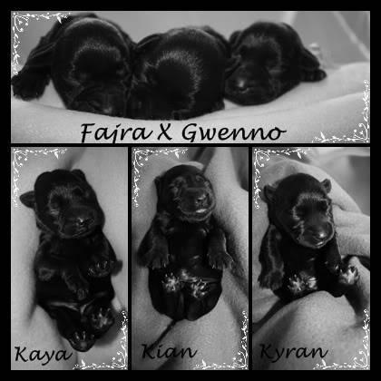 creation of puppy pics Mooi-1