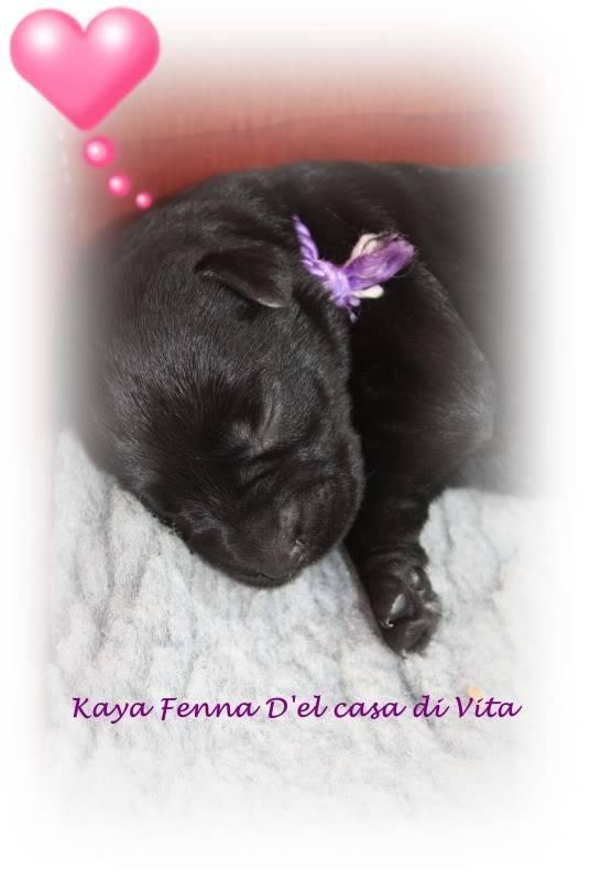 creation of puppy pics Mooi-2