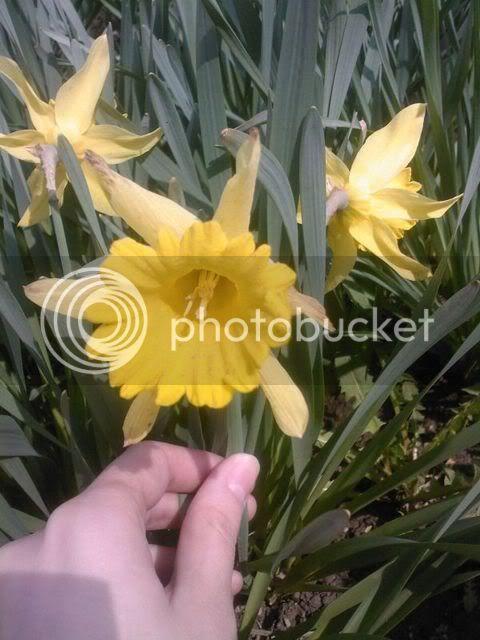 florile din apartament/gradina - Pagina 7 SPM_A1345