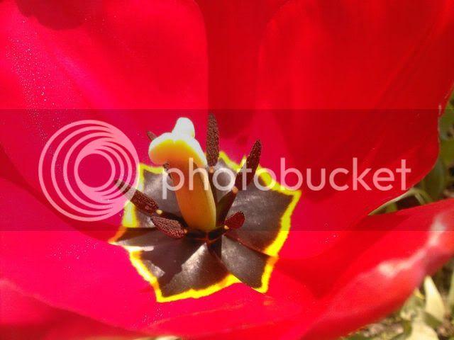 florile din apartament/gradina - Pagina 7 SPM_A1366