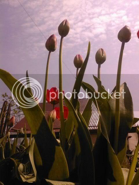 florile din apartament/gradina - Pagina 7 SPM_A1371