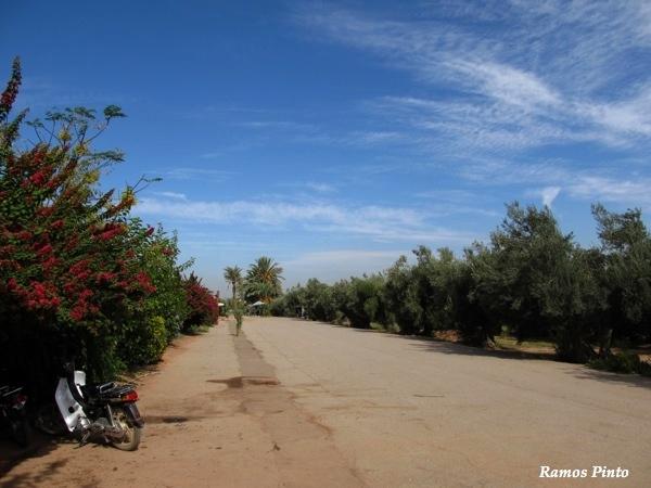 O Meu Zoom...de Marrocos, em 2014 - Página 2 32d35157-d8a2-4c5a-ba09-c3485dcc4cda_zps2060bca2