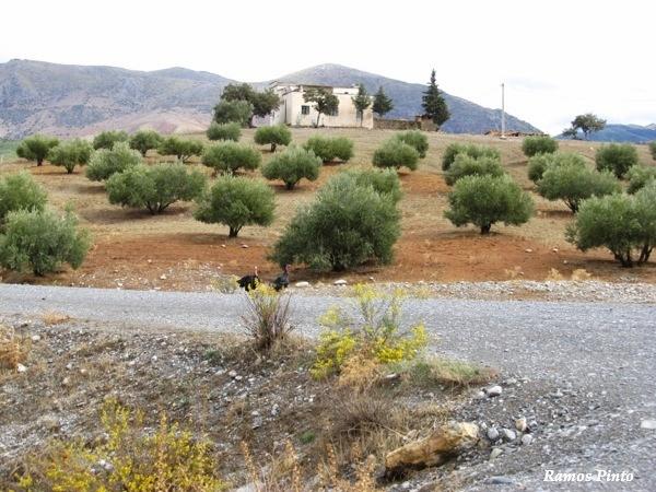 O Meu Zoom...de Marrocos, em 2014 - Página 2 5c073af1-84c9-4129-bbae-a585d510bced_zpsea01730a