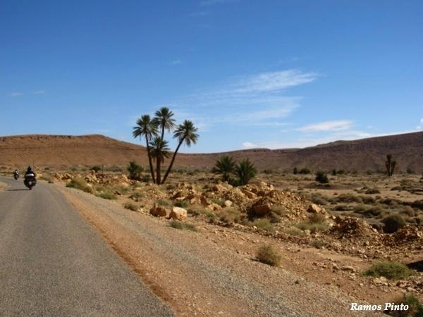 O Meu Zoom...de Marrocos, em 2014 - Página 2 73cf6c6f-ee48-4890-a73b-86fcb4fbc1aa_zps4a0551dd