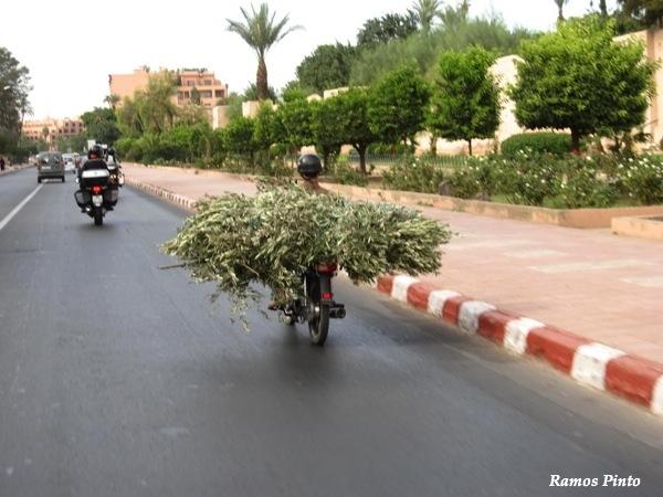O Meu Zoom...de Marrocos, em 2014 - Página 2 78c3ed95-d8bb-4001-a533-444c5fcc9a11_zpse039e853