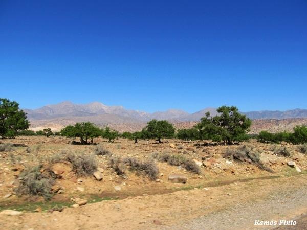 O Meu Zoom...de Marrocos, em 2014 - Página 2 7ae20c41-7071-4cba-a067-83746276f775_zps7785f33a