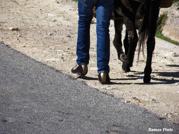 O Meu Zoom...de Marrocos, em 2014 - Página 2 98d1fc62-4a3e-4c26-ba36-4df5372045db_zpsb46baaee