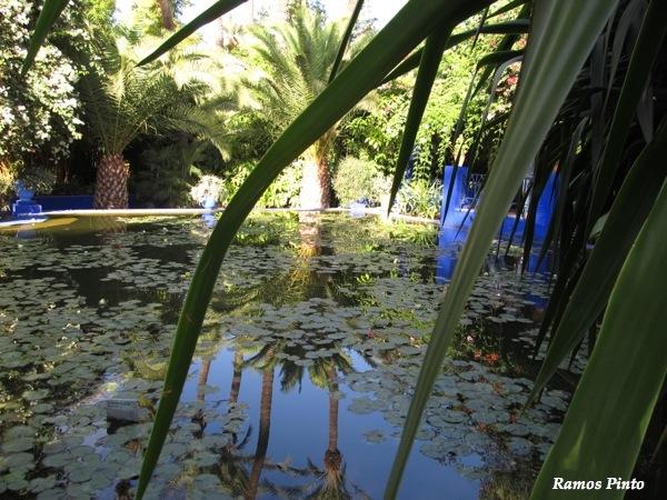 O Meu Zoom...de Marrocos, em 2014 - Página 2 IMG_4941_new_zps8232a87e