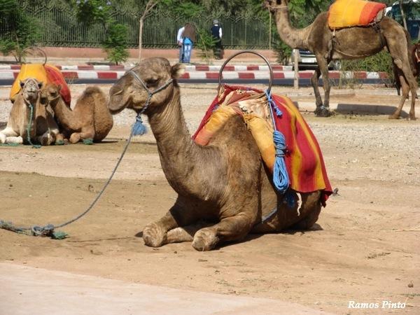 O Meu Zoom...de Marrocos, em 2014 - Página 2 IMG_4974_new_zps75f89f9c
