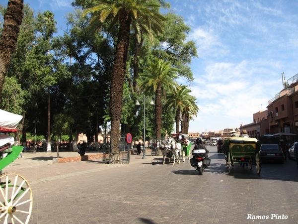 O Meu Zoom...de Marrocos, em 2014 - Página 2 IMG_4991_new_zps1a999ac6
