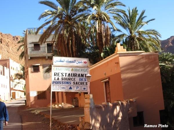 O Meu Zoom...de Marrocos, em 2014 - Página 2 IMG_5243_new_zps4474fba1