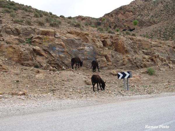 O Meu Zoom...de Marrocos, em 2014 - Página 2 IMG_5334_new_zpseb0219a2